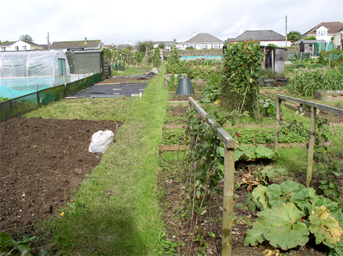 allotment_thumblarge